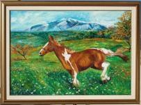 cavallo in libertà