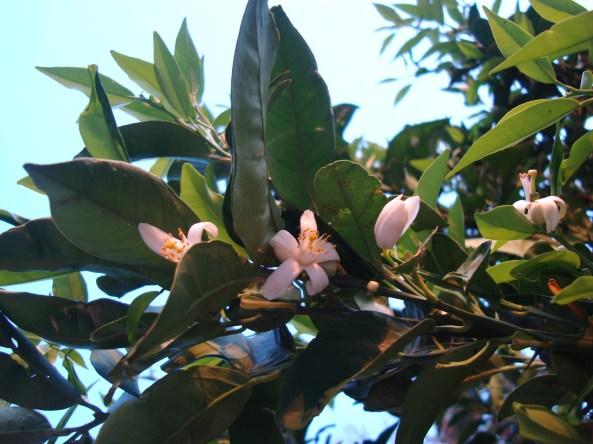 seconda fioritura (ottobre)